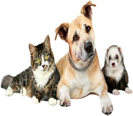 best pet insurance for multiple dogs