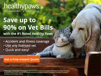 best type of pet insurance for cats